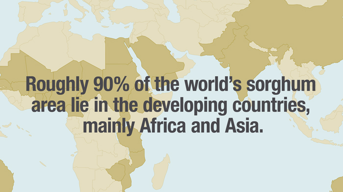 Roughly 90% of the World's Sorghum is Grown in Africa and Asia
