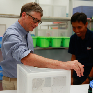 Mosquito Week: Bill Allows Mosquitoes to Feed on His Blood, Indonesia | GatesNotes.com The Blog of Bill Gates