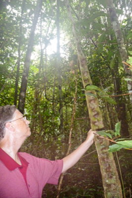 An Amazing Amazon Adventure - Rainforest Remedies