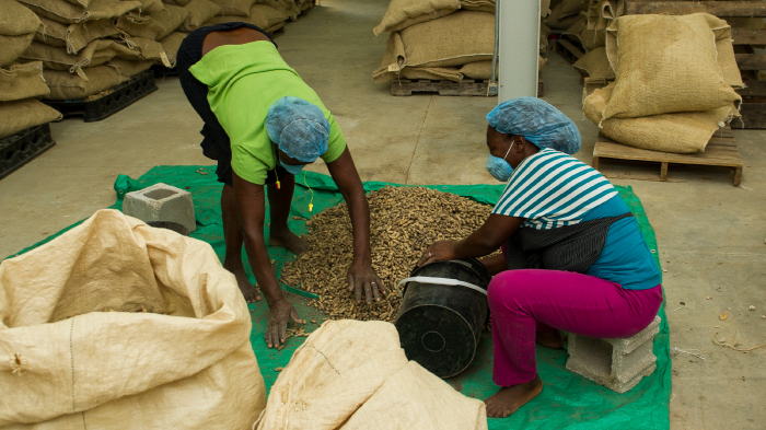 Workers processing peanuts at a factory in Haiti