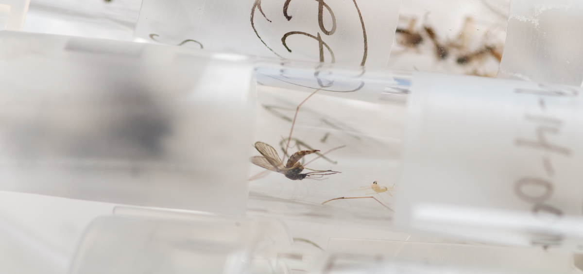 Test-tube mosquitoes might help us beat malaria | Bill Gates